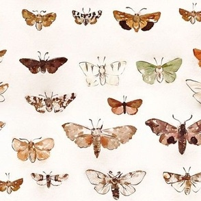 Watercolor Lepidopterology - Moth Study