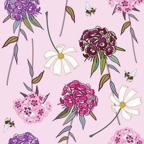 sweet willams on pink