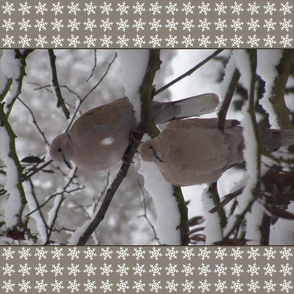 10636234 © doves in winter snow