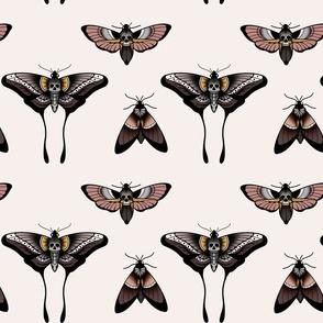 Moth death butterfly in beige