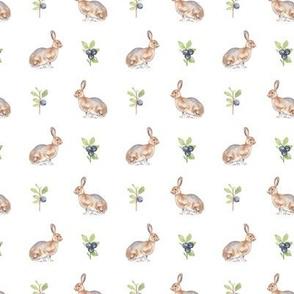 Woodland Hare On White