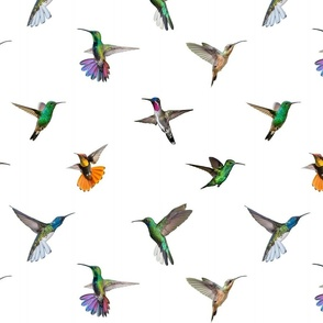 Hummingbirds of T and T - 2020 - White