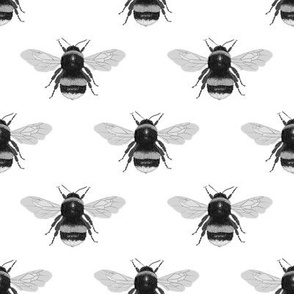 Bumblebee (black and white)