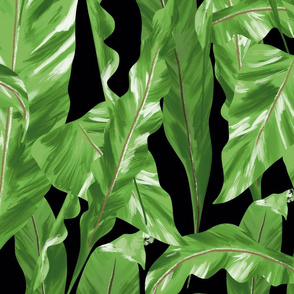 Tropical Pattern Black Leaves
