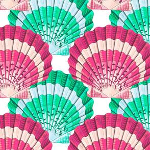 Shells colorful