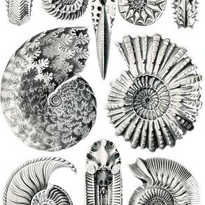 Vintage Shells 2