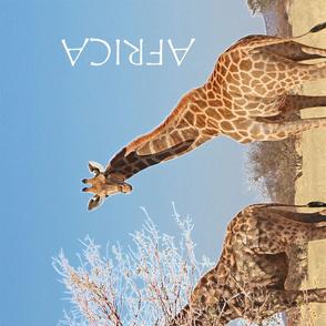African Giraffes Tea towel