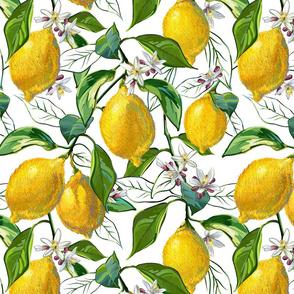 Fresh Lemons | Large | Solid White