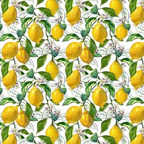 Fresh Lemons | Small | Solid White