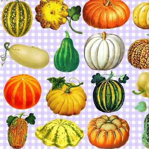 Pumpkins on lavender gingham