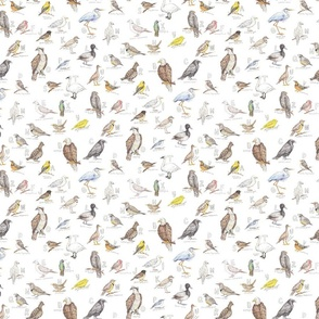A-Z Birds of the Pacific Northwest Pattern