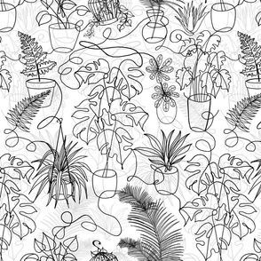 House Plants (black and white)