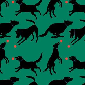 The playful black dog - green background