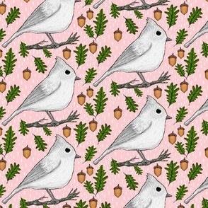 backyard winter autumn birds: Oak Titmouse, small scale, gray grey white pink green brown