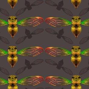 Small Cicada