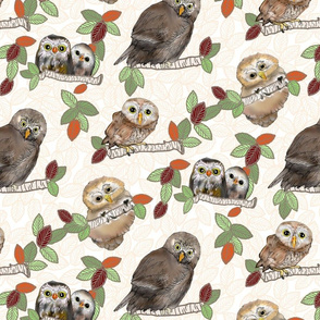 Owls White background