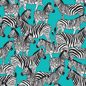 zebra college blue