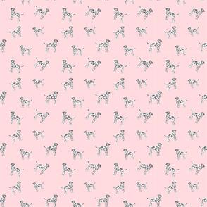 Blushing Dalmatians