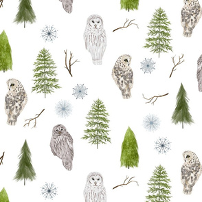 Medium Winter Owls and Trees on White