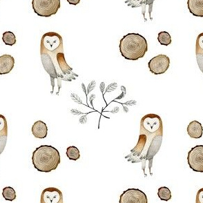 Barn Owl_small