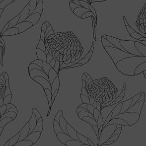 Charcoal Protea