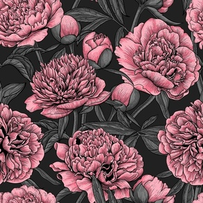 Pink peony garden on dark gray