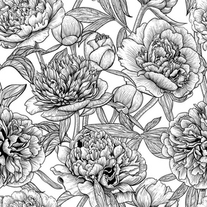 Peony garden in black and white