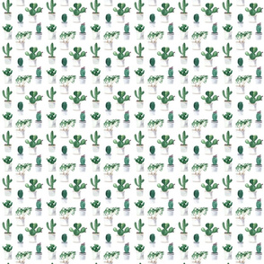 Cactuses Pattern On White