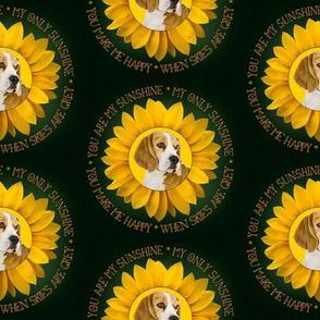 Beagle Sunshine