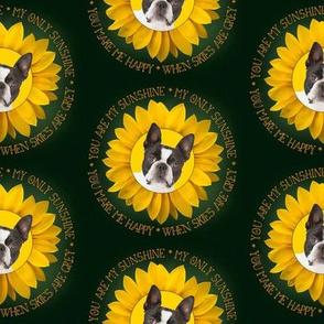 Boston Terrier Sunshine