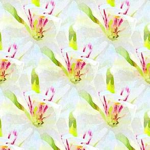 Watery white geranium