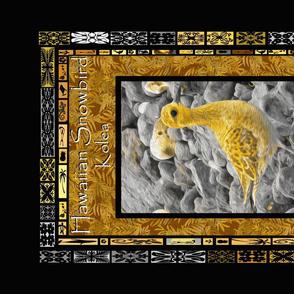Hawaiian Winter BIrd - Kolea - Pacific Golden Plover