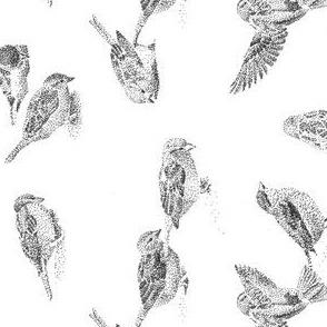 Sparrows tea towel