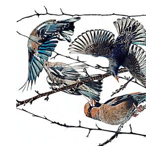 Winter garden birds