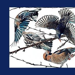Winter garden birds - Blue border