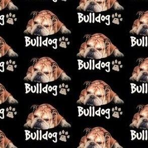 Cute English Bulldog on Black