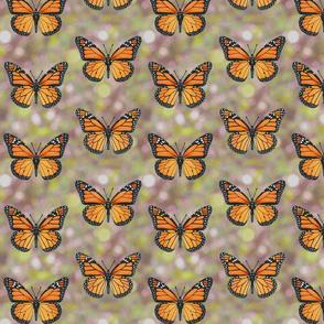 Monarch Butterflies on spring green bokeh