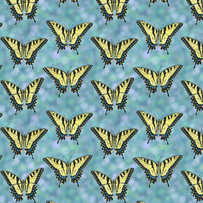tiger swallowtail butterflies on blue bokeh