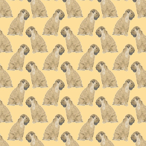 Sitting Wheaten Terriers - gold