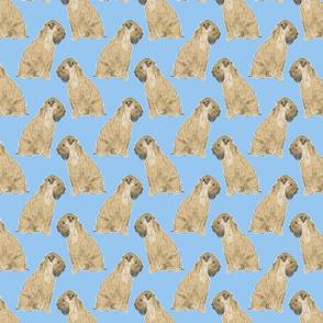 Sitting Wheaten Terriers - blue
