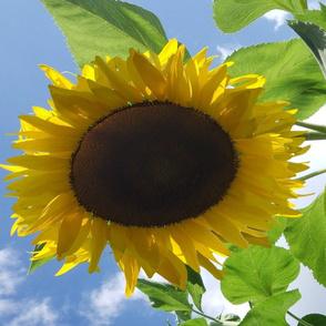 Heavenly Sunflowrers