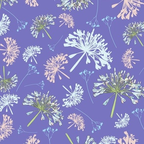 Cultured Agapanthus P-1001 Small