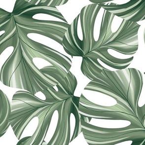 Botanical Oasis. Monstera leaves on white