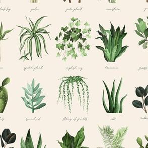 Indoor Plants Light / Plant Lovers