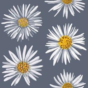 white asters on gray dense