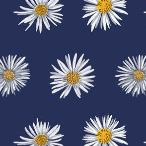 white asters on dark blue airy