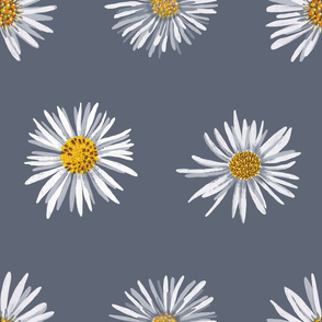 white asters on slate airy