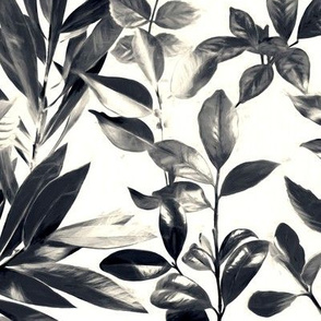 Split Toned Black and White Botanical Garden - large