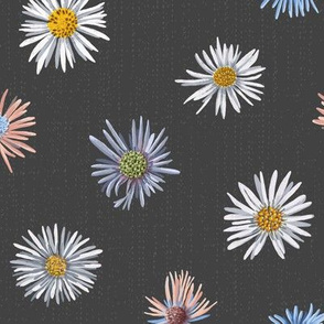colorful asters on dark gray scattered