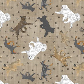 Trotting cropped Shepherding dog breeds of France - faux linen
